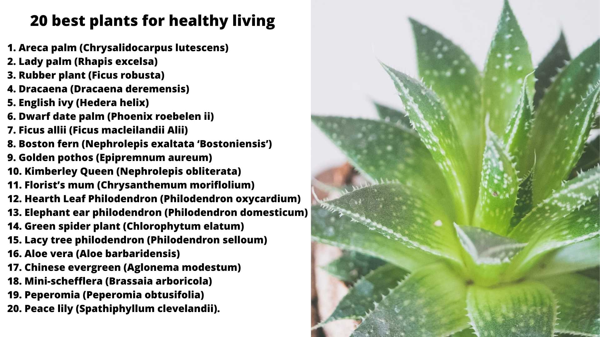 20 best plants for healthy living