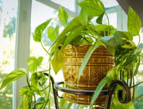 Feng Shui and Plants, our Green Protectors