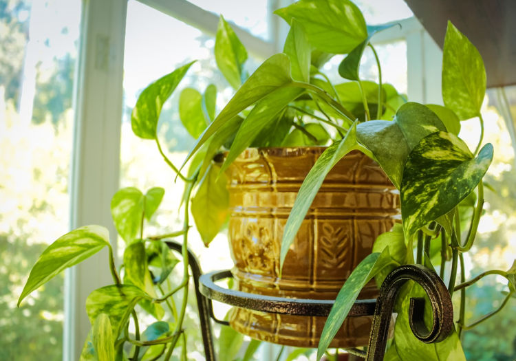 Feng Shui and plants - our green protectors